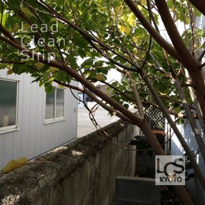 お生い茂った枝木