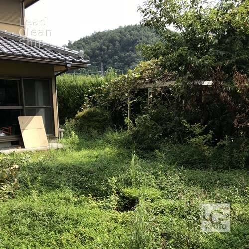 庭の剪定前